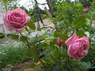2012_0523_112357-CIMG3636.jpg