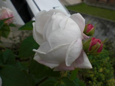 2012_0523_115428-CIMG3642.jpg