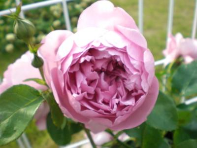 2012_0523_162243-CIMG3681.jpg