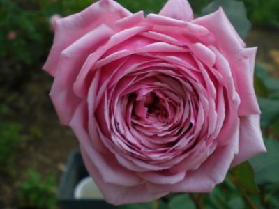 2012_0523_162700-CIMG3695.jpg