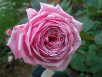 2012_0523_162729-CIMG3697.jpg