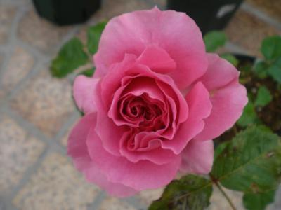 2012_0524_172647-CIMG3748.jpg