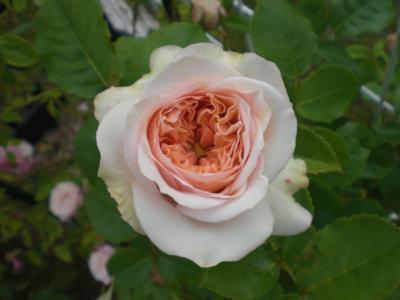 2012_0524_173807-CIMG3791.jpg