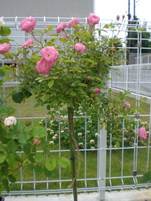 2012_0524_173836-CIMG3793.jpg
