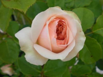 2012_0525_074059-CIMG3824.jpg