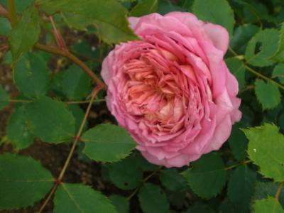 2012_0525_082544-CIMG3845.jpg