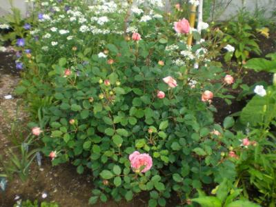 2012_0525_082555-CIMG3846.jpg