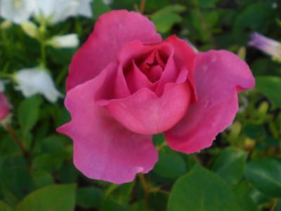 2012_0526_064747-CIMG3860.jpg