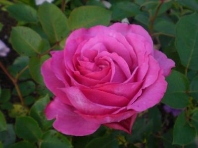 2012_0526_064754-CIMG3861.jpg