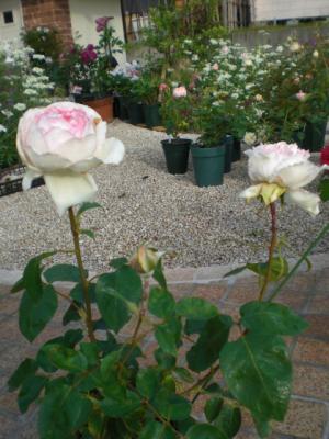 2012_0526_065208-CIMG3867.jpg