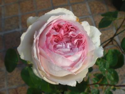 2012_0526_065239-CIMG3870.jpg