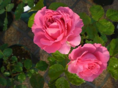 2012_0526_065254-CIMG3872.jpg