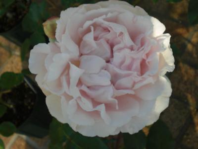 2012_0526_065533-CIMG3883.jpg