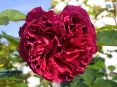 2012_0526_070518-CIMG3924.jpg