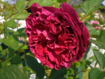 2012_0526_070545-CIMG3927.jpg