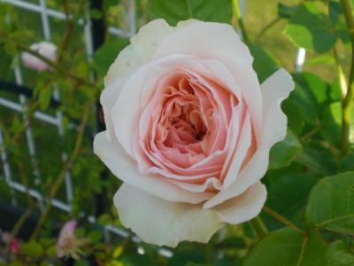 2012_0526_070621-CIMG3930.jpg