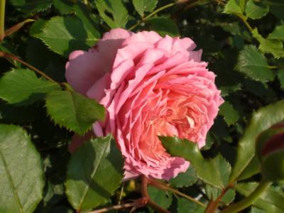 2012_0526_071122-CIMG3948.jpg
