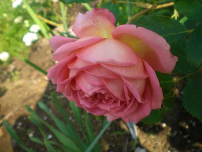 2012_0526_071413-CIMG3951.jpg