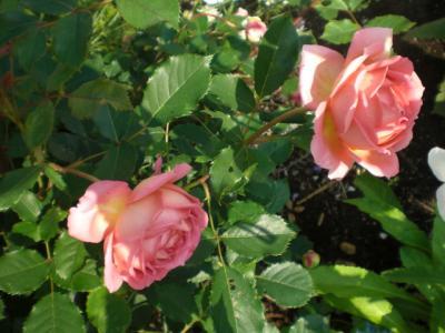 2012_0526_071449-CIMG3953.jpg