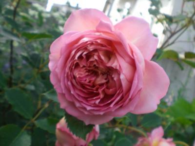 2012_0526_154019-CIMG4008.jpg