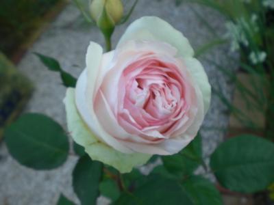 2012_0527_165527-CIMG4061.jpg