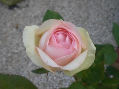 2012_0527_165532-CIMG4062.jpg