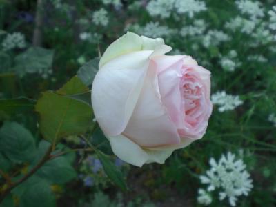 2012_0527_165538-CIMG4063.jpg