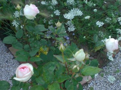 2012_0527_165611-CIMG4067.jpg
