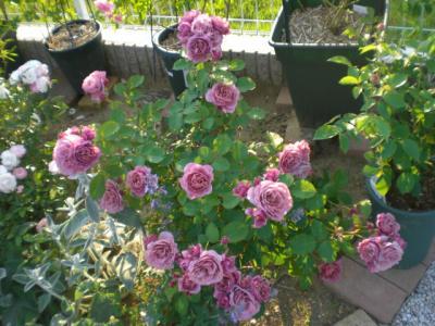 2012_0527_173827-CIMG4092.jpg