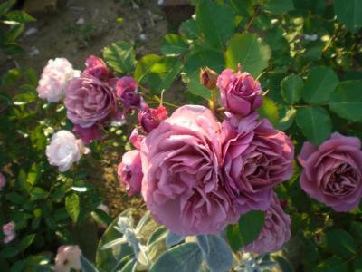 2012_0527_173842-CIMG4094.jpg