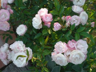 2012_0527_173913-CIMG4097.jpg