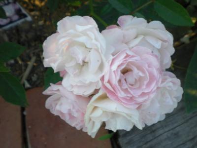 2012_0527_173934-CIMG4099.jpg