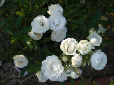 2012_0527_173942-CIMG4100.jpg