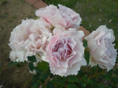 2012_0527_174019-CIMG4102.jpg