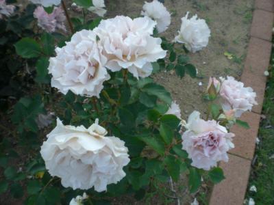 2012_0527_174046-CIMG4105.jpg