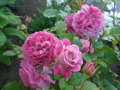 2012_0527_174238-CIMG4108.jpg