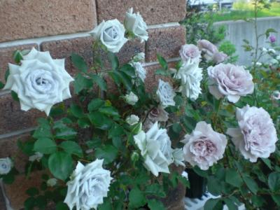 2012_0527_175429-CIMG4131.jpg