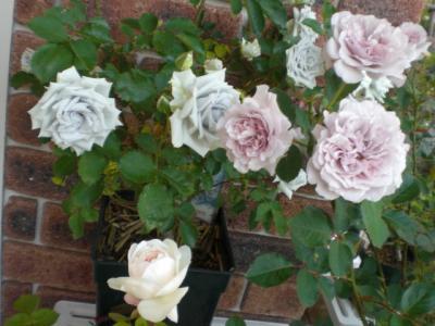 2012_0527_175505-CIMG4134.jpg