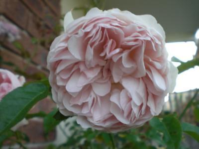 2012_0527_175838-CIMG4139.jpg