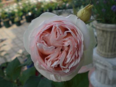 2012_0528_151938-CIMG4158.jpg