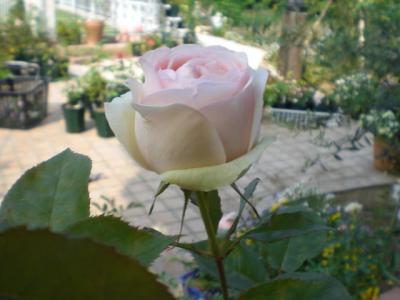 2012_0528_151951-CIMG4159.jpg