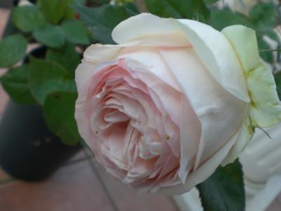 2012_0528_152004-CIMG4160.jpg