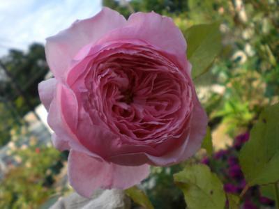 2012_0528_152341-CIMG4166.jpg