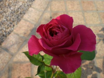 2012_0530_151907-CIMG4230.jpg