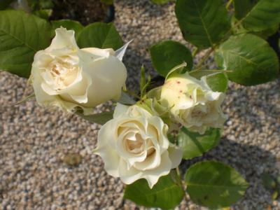 2012_0530_151938-CIMG4233.jpg