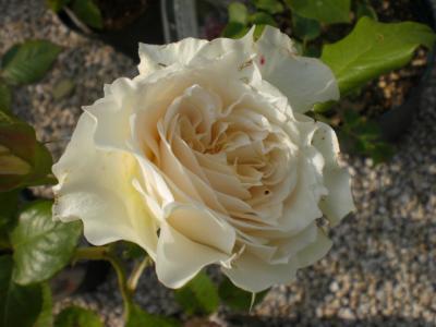 2012_0530_151944-CIMG4234.jpg