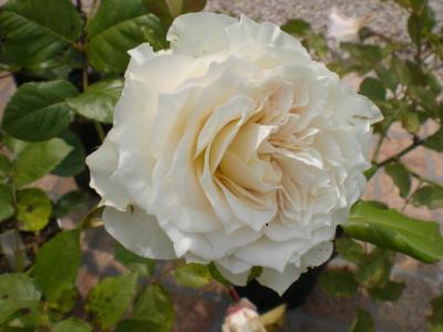 2012_0531_143515-CIMG4257.jpg