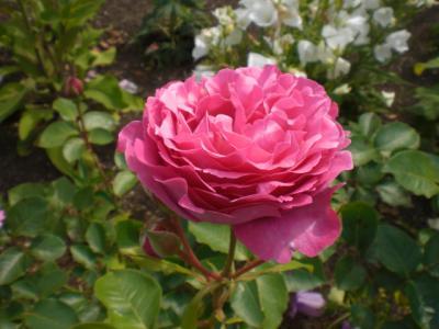 2012_0531_144507-CIMG4279.jpg