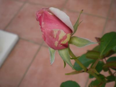 2012_0531_151826-CIMG4289.jpg