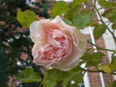 2012_0601_082609-CIMG4293.jpg